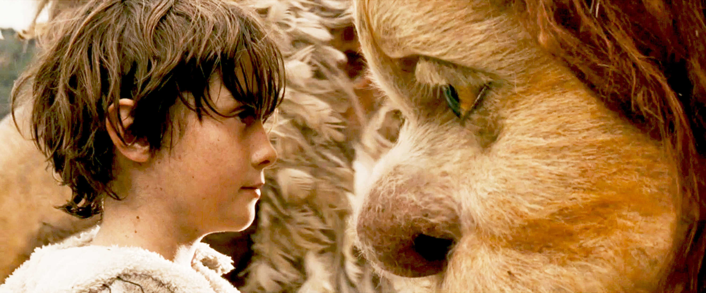 The wild things haptic visuality in where the wild things are